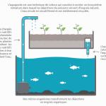 Cycle de l'azote de son système aquaponique