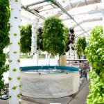 L'aquaponie et l'agriculture conventionnelle