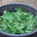 Pensez aux additifs naturels pour booster vos plantes en aquaponie