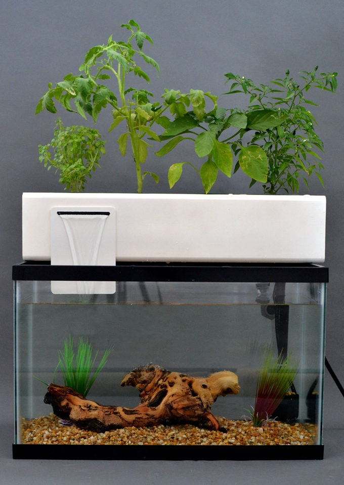 Aquarium en aquaponie, projet Blue Green Box