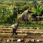 Définition de la permaculture