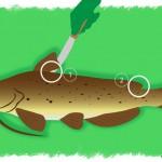 Comment bien vider et préparer ses poissons ?