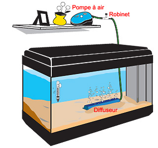 Comment installer un bulleur dans un aquarium