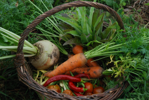 semences-permaculture