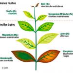 Savoir détecter les carences de vos plantes en aquaponie