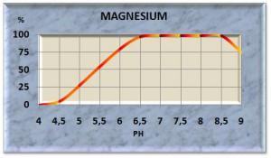 magnes11