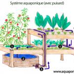 Les éléments d'un système aquaponique