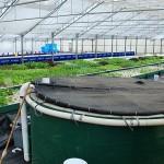 Pourquoi choisir l'aquaponie plutôt que la culture en terre ?