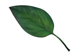 carence-phosphore-aquaponie