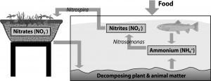 cycle aquaponie