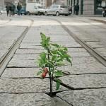 Guide du jardinage urbain