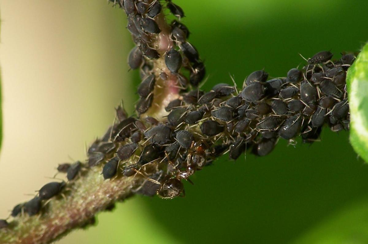 Lutter contre les insectes ravageurs et contr ler les for Maladie plante verte