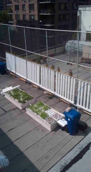 jardiner-sur-les-toits