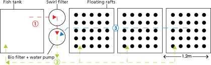 Guide pas à pas dans la construction d'une unite aquaponique classique NFT et DWC (66)