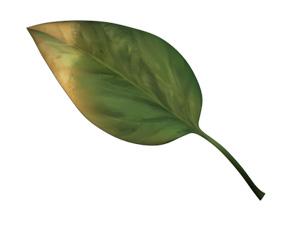 carence-cuivre-aquaponie