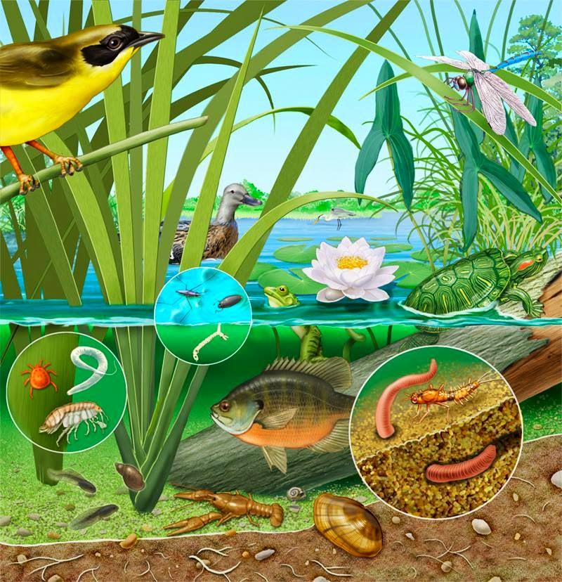 Faire un bassin artificiel dans son jardin aquaponie - Creer son jardin ...