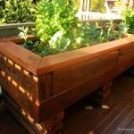 Créer son potager bio en aquaponie sur son balcon