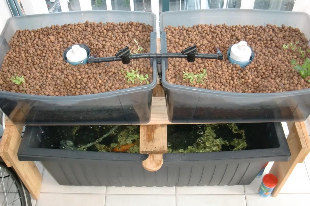 cr er son potager bio en aquaponie sur son balcon. Black Bedroom Furniture Sets. Home Design Ideas