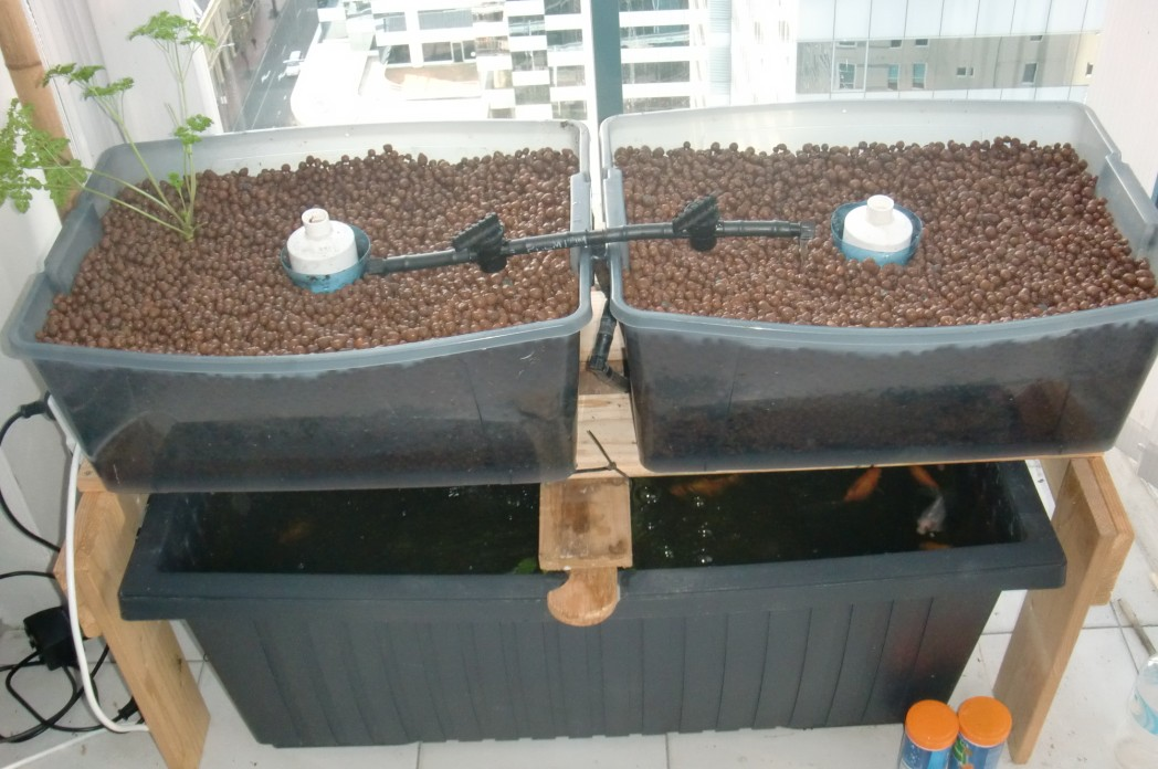 Cr er son potager bio en aquaponie sur son balcon - Potager sur un balcon ...