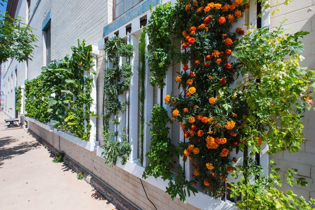 jardin-vertical-mur-vegetal-aquaponie