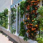 Tours de culture verticales et mur végétal en aquaponie