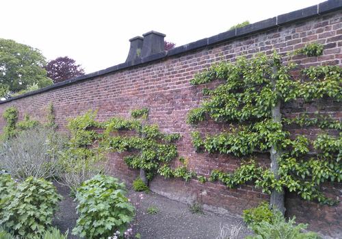 Un exemple de mur de cultures chauffé à Liverpool. Photo : The Horticultural Therapist