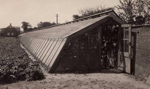 Une serre néerlandaise des années 1930, construite contre un mur de briques.