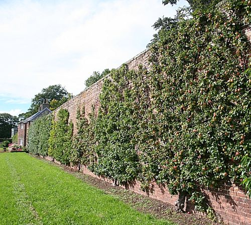 Un mur de culture anglais. Wikipédia