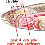 Comment tuer un poisson sans souffrance
