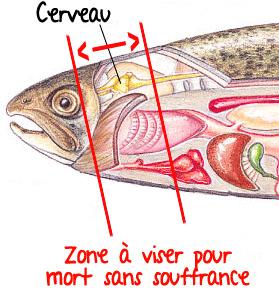 tuer-poisson-aquaponie