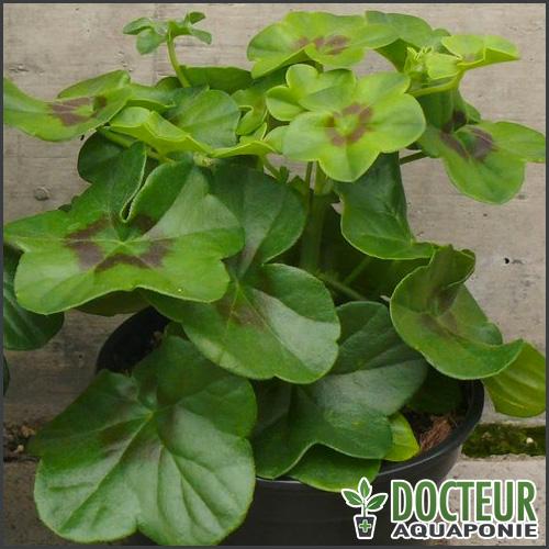 decoloration-totale-jeunes-feuilles