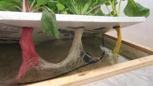 raft-aquaponie