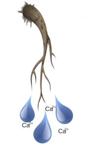 calcium en aquaponie (1)