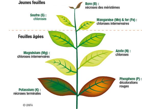 Diagnostic des feuilles par UNIFA