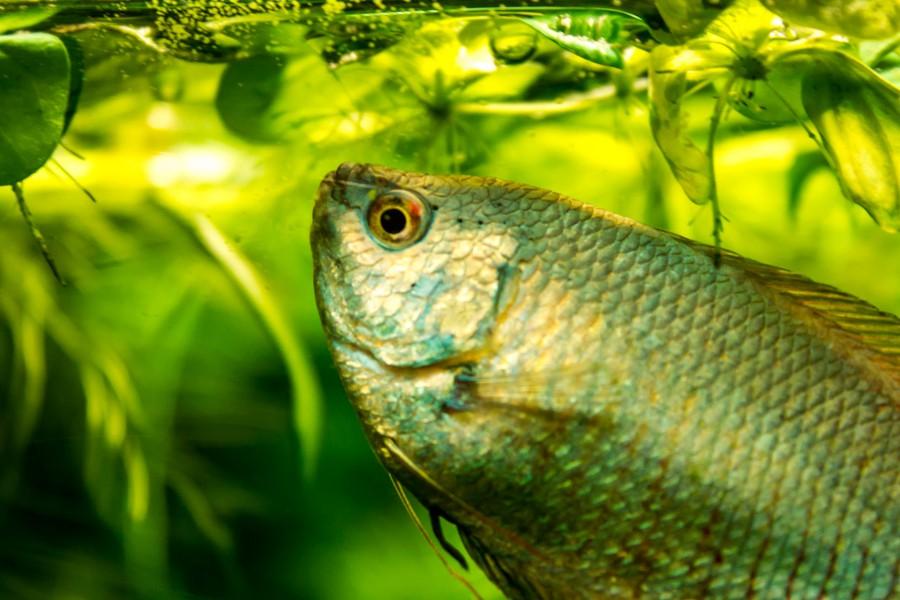 Nourrir ses poissons
