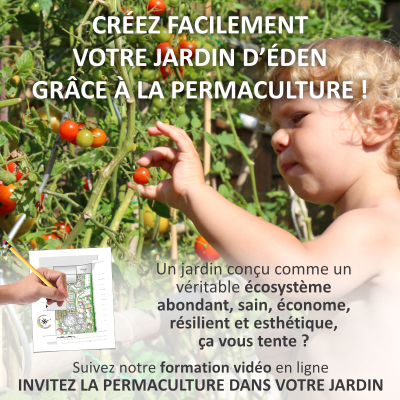 formation-permaculture