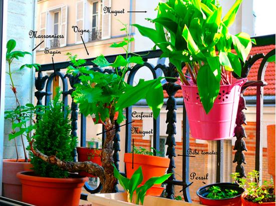 jardiner-balcon