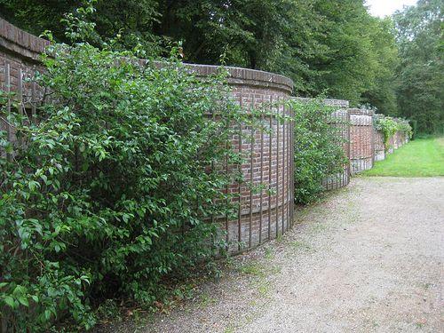 Un exemple de mur de cultures sinueux aux Pays-Bas. Wikipédia
