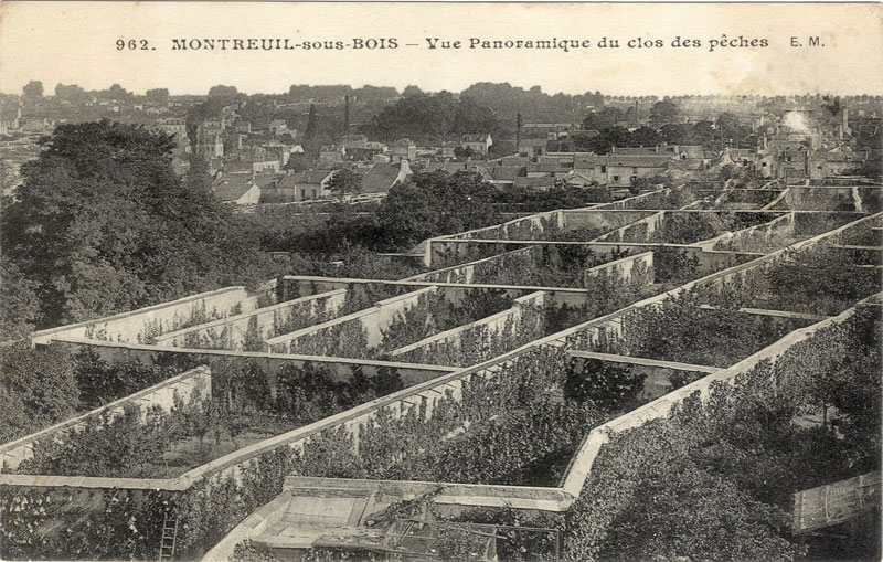 cultiver-fruitiers-pres-des-murs-permaculture-5