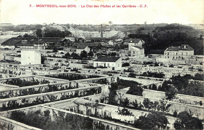 cultiver-fruitiers-pres-des-murs-permaculture-6