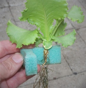 Grow-Grip-with-Plant