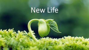 nouvelle-vie-aquaponie