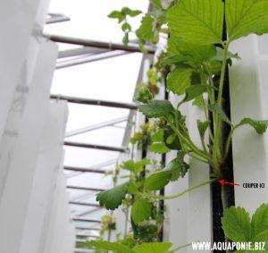 entretien-zipgrow-fraises