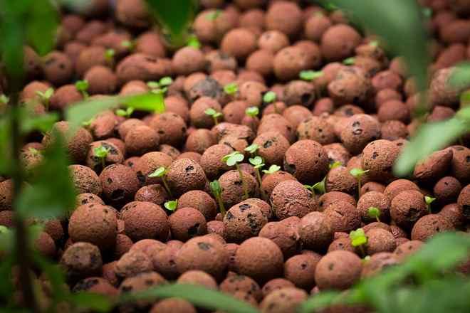 semis-aquaponie