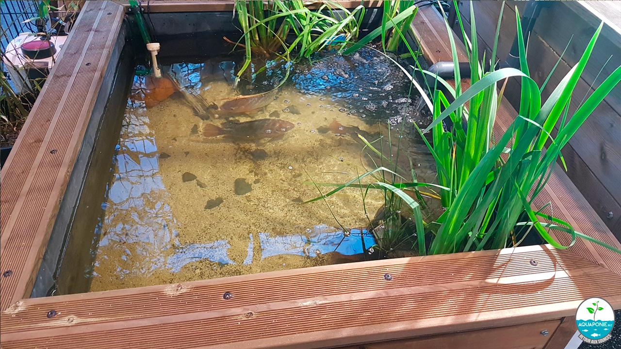 Fabriquer Une Tour A Poisson fabriquer vos bassins à poissons et tables de culture diy